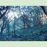 ■和歌山県/南紀大島:2006年12月3日